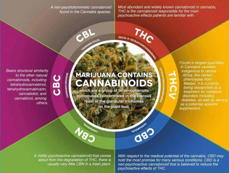 cannabinoids explained