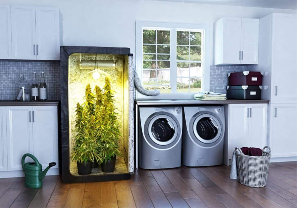 how to grow cannabis in home beginners