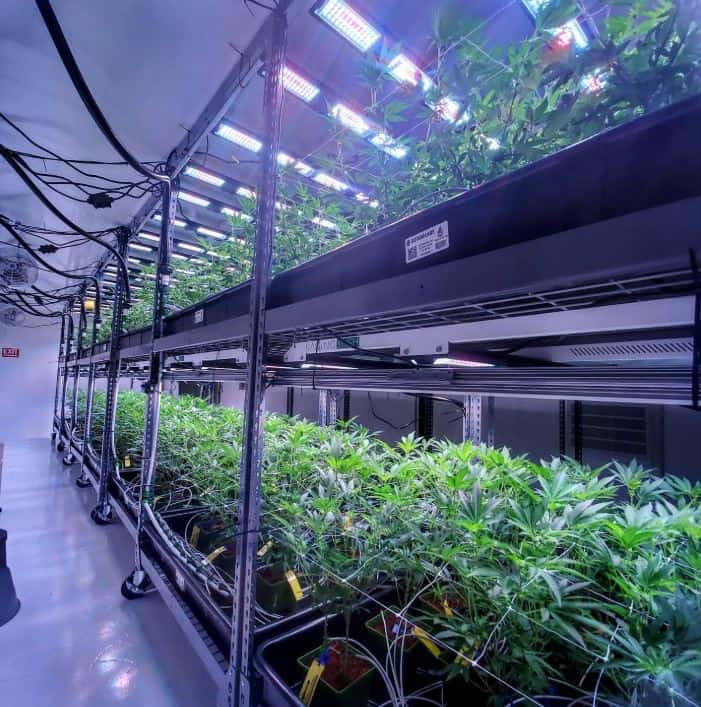 commercial grow solutions