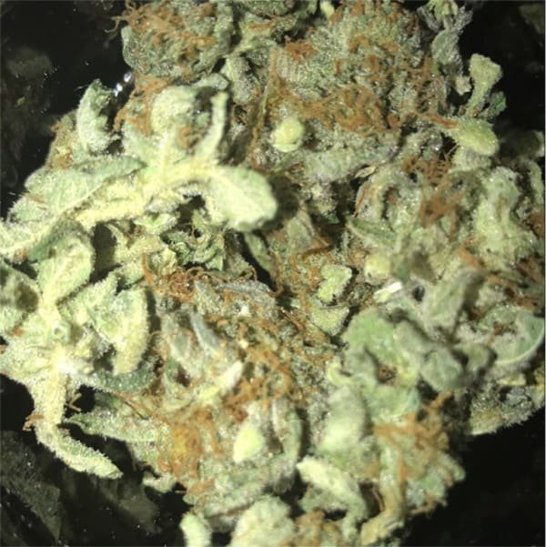 Girl Scout Cookies review