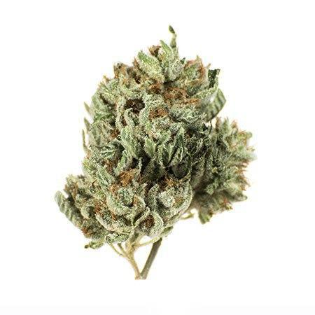 South Plant review