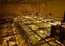 how to choose the right grow fan