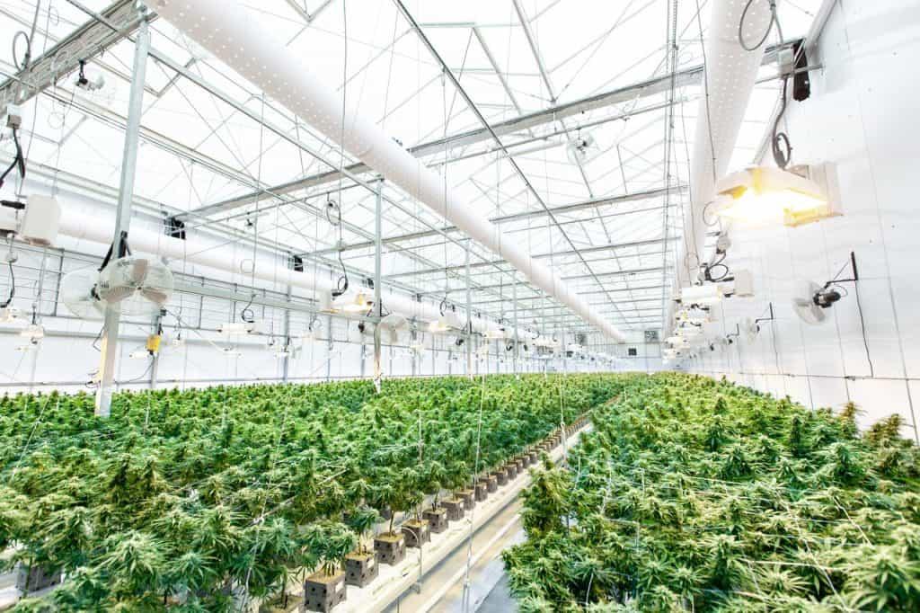 open vs closed loop grow rooms