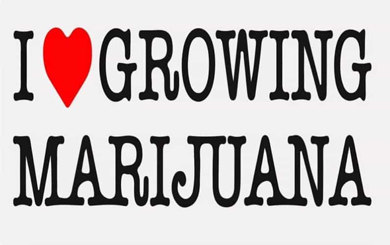 I heart growing marijuana review