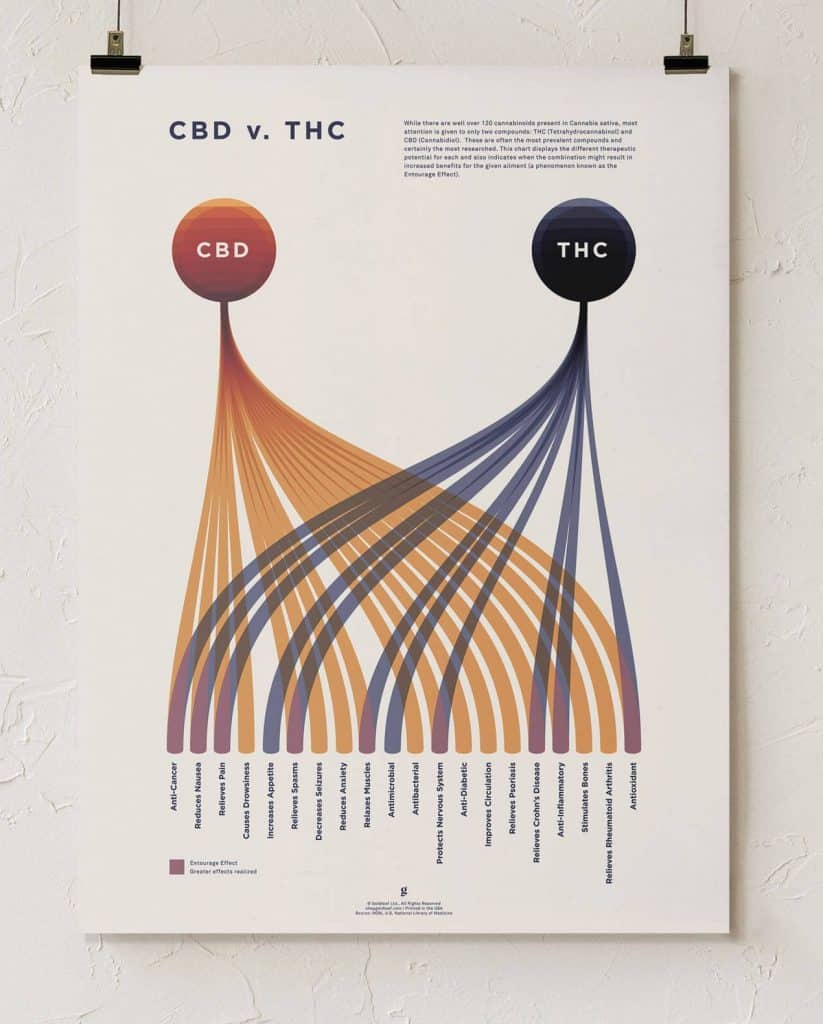 cbd vs thc benefits infographic