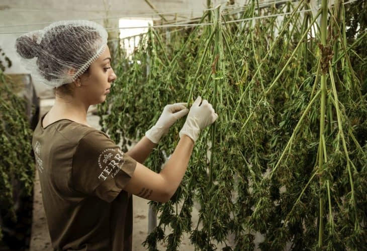 curing methods compared