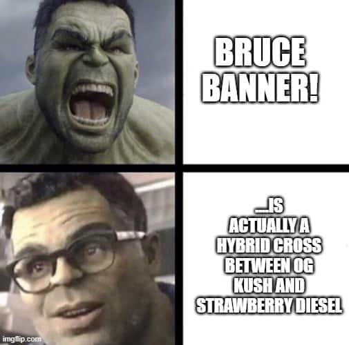 Bruce Banner strain name
