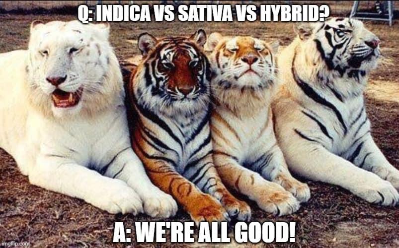 indica-sativa-hybrid-meme