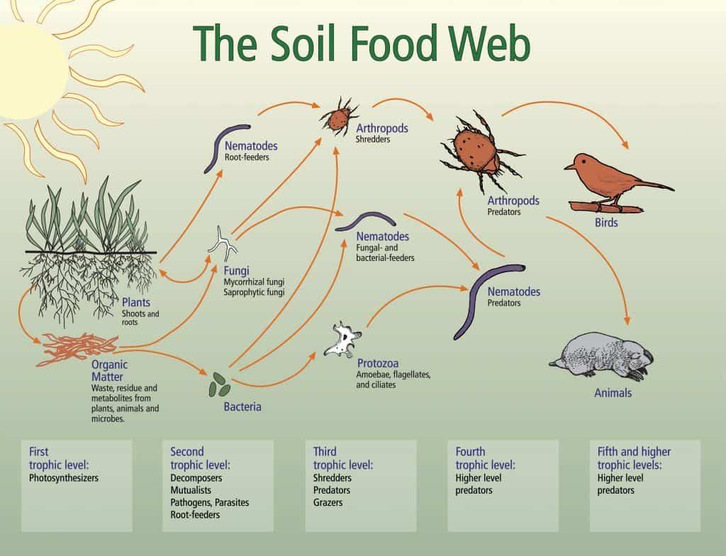 organic soil web explained