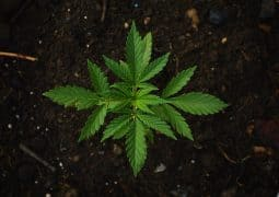 guide to organic weed