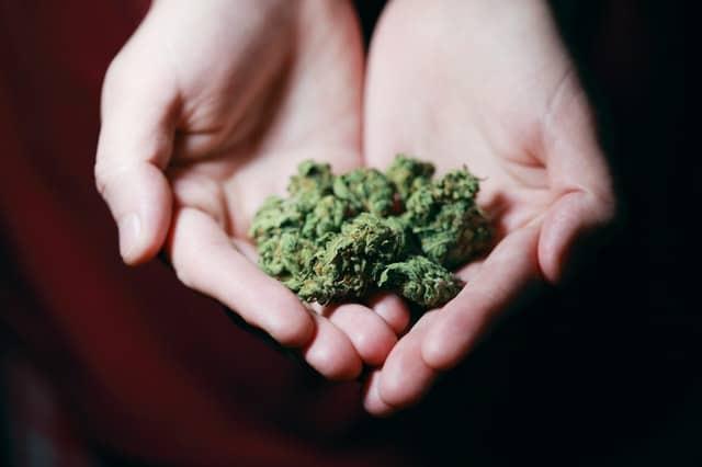 cannabis texture