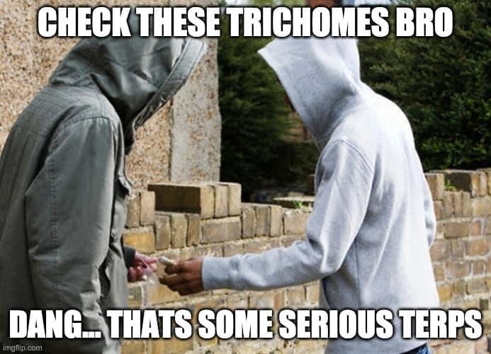 street dealer meme