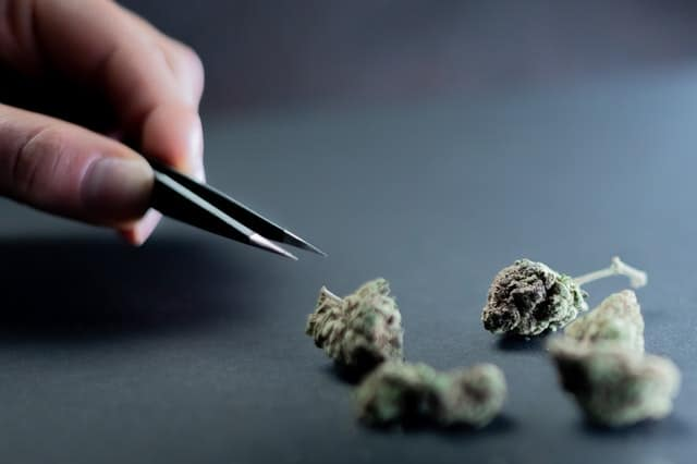 How to Trim Weed: The Ultimate Guide