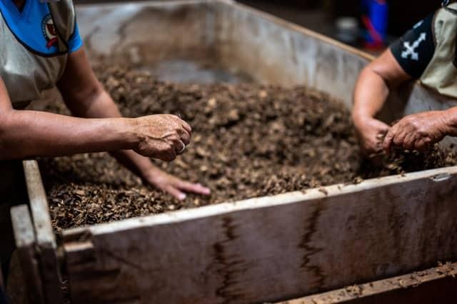 what makes good cannabis growing soil